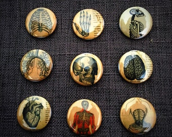 Creepy Vintage Anatomy Buttons