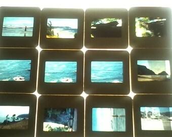 Colorful Vintage 1981 35mm Slides  of Redwood National Forest In All It's. Beauty / Set of 12 Slides