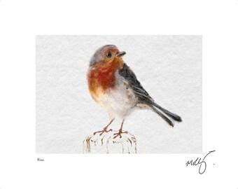 Red robin art print. robin print