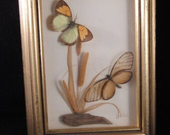Vintage decorating butterflies taxidermy framed by Leslie Mcguire
