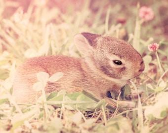 Baby Bunny Photograph - Nursery Decor - Wall Art - Children's Art - Easter Decor