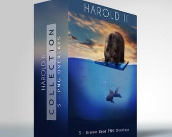 Harold - II - 5 Brown Bear Transparent PNG Images