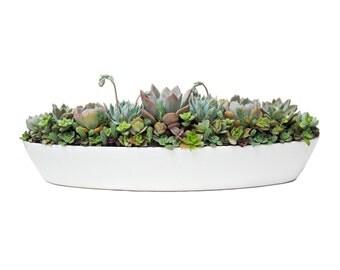 "Succulent Centerpiece Arrangement 18"" White Ceramic  Oblong Planter Modern Minimalist Plant Dish Garden"