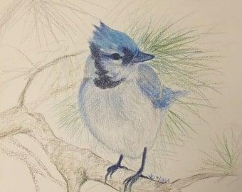 Color pencil / Watercolor painting - birds