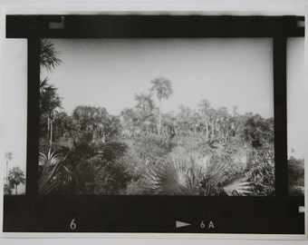 Black and White Darkroom Print of Pilar Beach 2014