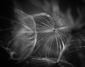 Dandelion Photograph, Abstract Picture, Macro Nature Photography, Black & White Horizontal Wall Art, Fine Art Print, Botanical Photo Print