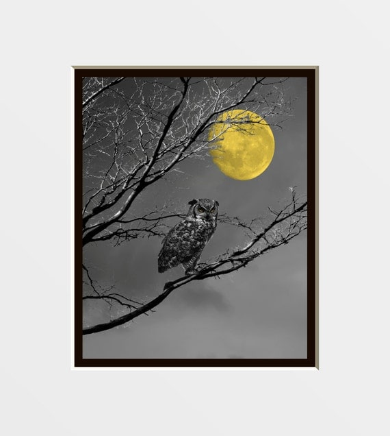 Black White Yellow Wall Art Photography Owl By