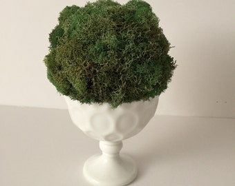 Moss ball topiary in white glass compote...