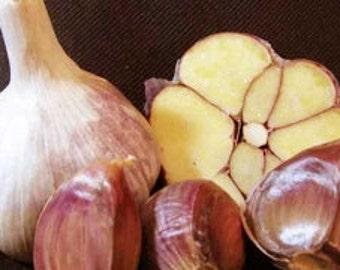 Russian Purple Garlic *5-10 lb* Organically Grown Large for Planting