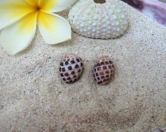 Hawaiian Shell Stud Earrings