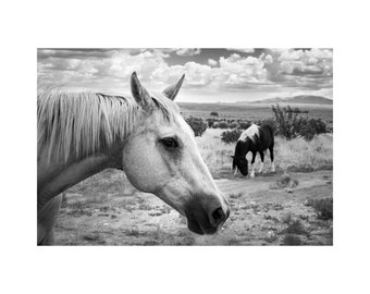 Palomino and Pony Fine Art Photography Black and White Horse Pony Southwest New Mexico Large wall art Western home decor Ranch house chic