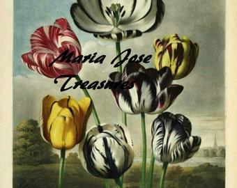 "Vintage Flowers 1 ""Temple of Flora"" - Digital Download"
