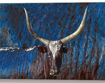 """Rustic Retro Steer- Photographic Art by Amanda Smith Wyoming. 18"""" x 12"""" professionally printed on Canvas and signed, ready to hang."""