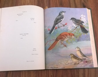 1929 Birds of Massachusetts and Other New England States by Edward Howe Forbush Vintage Book Green Color Plates Field Guide Nature Birding