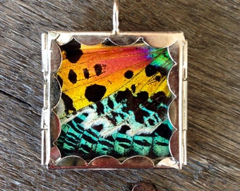 Sunset Moth Butterfly Wing Pendant