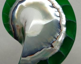 Green Tiger Nautilus Shell half 50mm x 33mm x 12mm