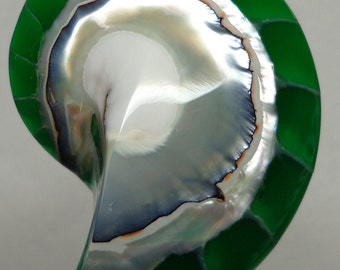Green Tiger Nautilus Shell half 30mm x 23mm x 7mm