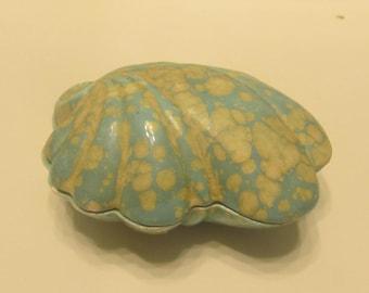 Blue Ocean Seashell