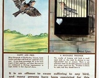 Vintage RSPCA Animal Cruelty Awareness Caged Birds Poster A3 Print