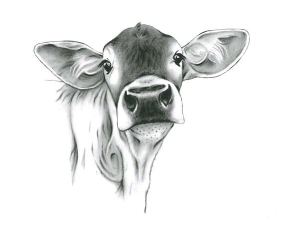 Farmhouse Art Cow Charcoal Drawing Print