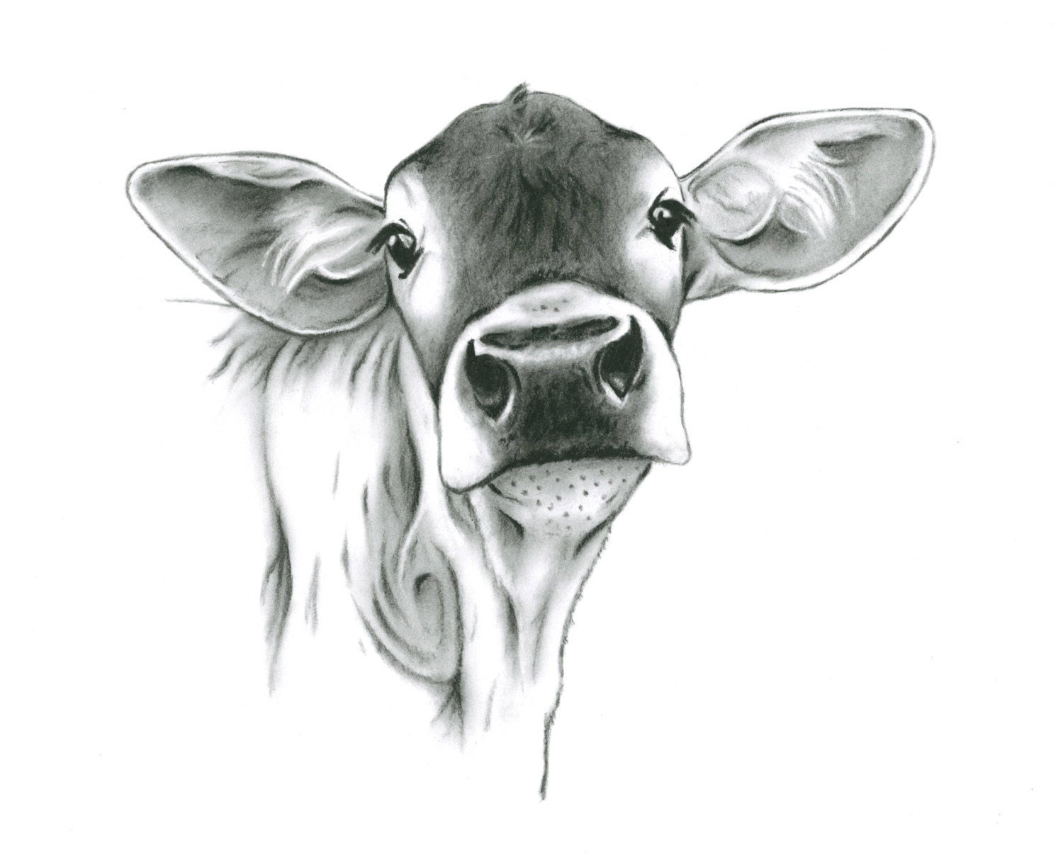 farmhouse art cow art charcoal drawing print. Black Bedroom Furniture Sets. Home Design Ideas