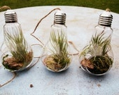 DIY TERRARIUM KIT - make your own terrarium in a lightbulb plant hanger // Choose between 4 types of stones // Tillandsia // Glass Hanger