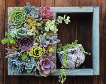 "Mini Shelf Vertical planter Succulent garden! 12"" x 9"""
