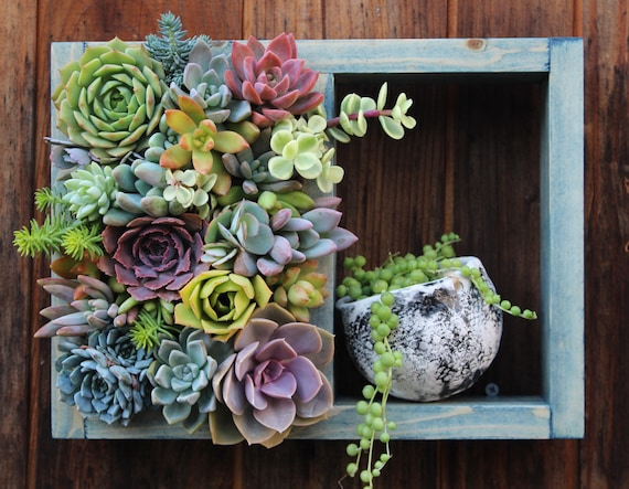 Mini shelf vertical planter succulent garden 12 x - Vertical gardens miniature oases ...