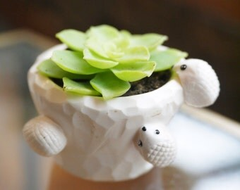 fetish mini cutting for succulent pot and its three hedgehogs