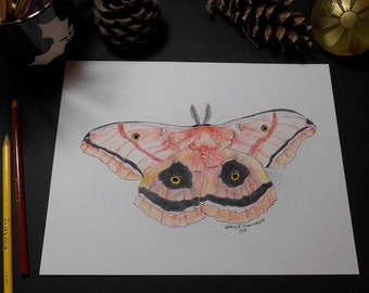 Moth Art Print/Colored Pencil Print/Illustration Print/Home Decor/Wall Art