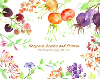 Hand painted watercolor hedgerow berries and wild flowers digital clipart instant download