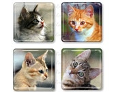 Set of 4, Kitten Magnets, Glass Tile Magnets, Glass Magnet, Refrigerator Magnets, Fridge Magnets, Kitty, Kitties, Cat Magnets, Cat Gift