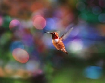 Nature Home Decor, Humming Bird, Hummingbird Wall Art, Colorful Art, Hummingbird Photo, Flying Hummingbird, Wildlife Art, Large Wall Art