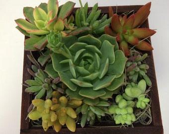 Succulent Plant Arrangement Completely Assembled Succulent Dish Garden.