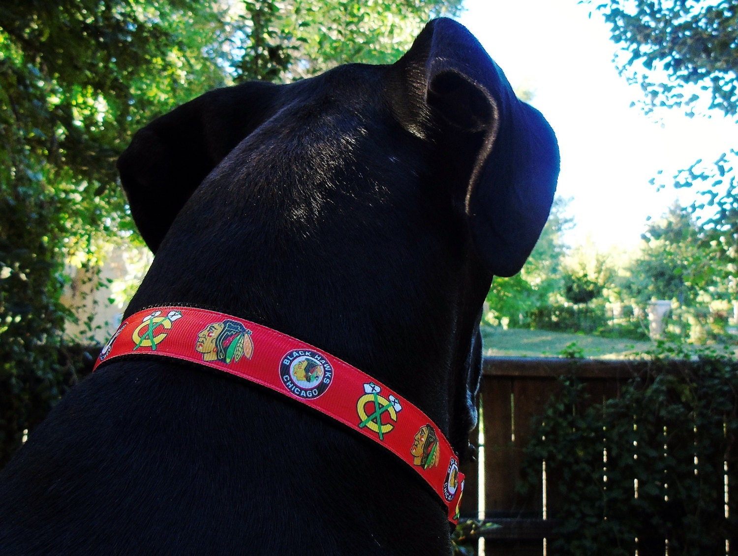 and light night up pin for collar dog medium led safety swman