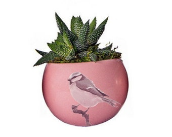 """Magnetized Luxe Planter with Live Plant - 3 x 3 x 5"""" - Pink Bird"""