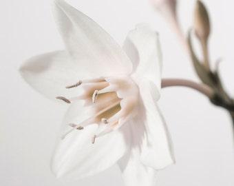 Springtime, photoart print/poster, 70x100cm (27,6x39,4inches)