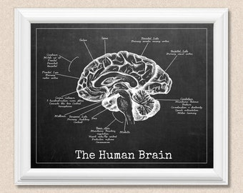 Human Brain Print - Personalise Background - Chalkboard, Blueprint, Aged Paper A178