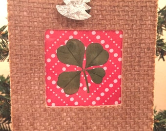 Real Four Leaf Clover Christmas Ornament (White Clover or Trifolium Repens)