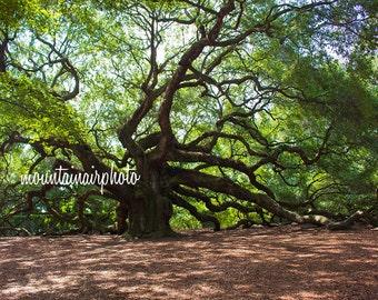 Angel Oak Tree - Charleston, South Carolina Photography