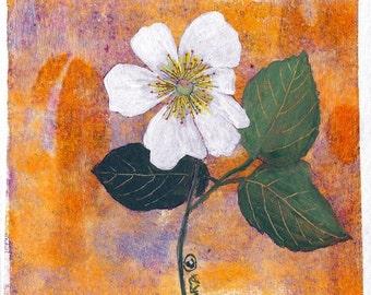 No.  1531  Wild Rose
