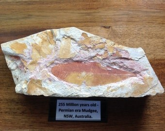 The Late Permian Megafossil Flora from Mudgee, New South Wales, Australia