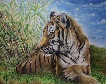 Tiger in the Grass original colored pencil drawing