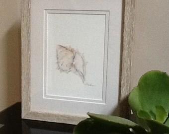 Watercolour - Muricidae or Murex shell