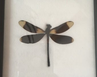 Mounted Dragonfly