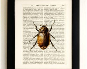 FRAMED ART PRINT on old antique book page - Insect, Brown Beetle, Vintage Upcycled Wall Art Print Encyclopaedia Dictionary Page