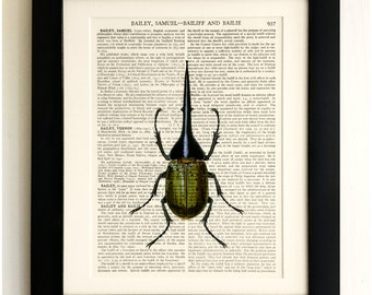 FRAMED ART PRINT on old antique book page - Insect, Big Beetle, Vintage Upcycled Wall Art Print Encyclopaedia Dictionary Page