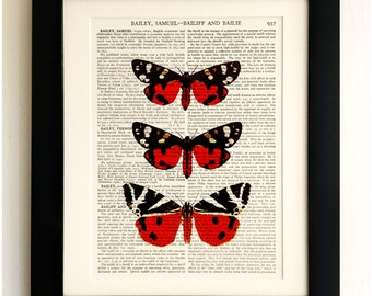 FRAMED ART PRINT on old antique book page - 3 Butterflies / Moths, Insects, Vintage Upcycled Wall Art Print Encyclopaedia Dictionary Page