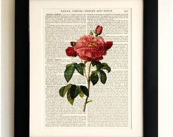 FRAMED ART PRINT on old antique book page - Pink Rose, Botanical, Flower, Vintage Upcycled Wall Art Print Encyclopaedia Dictionary