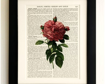 ART PRINT on old antique book page - Pink Rose, Botanical, Flower, Vintage Upcycled Wall Art Print, Encyclopaedia Dictionary Page